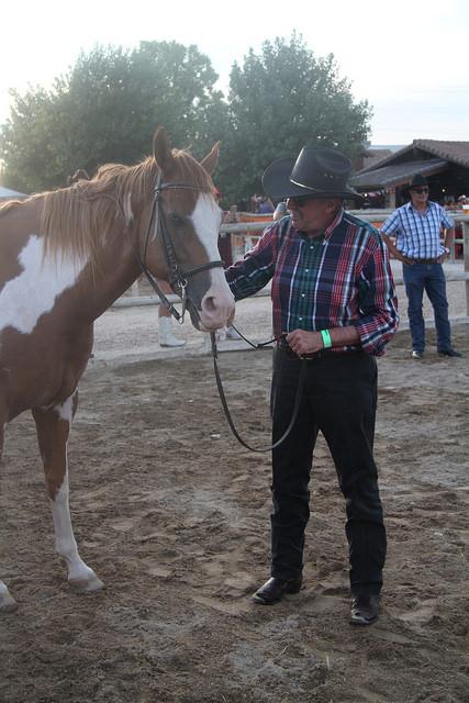 manolo-caballo